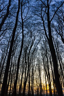 Sunset in Forest / Sonnenuntergang im Wald