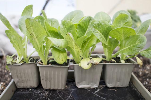 Seedling Planting Spring 2014_9