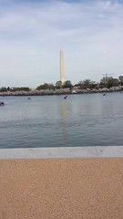 Cherry Blossom Walk and Washington Monument
