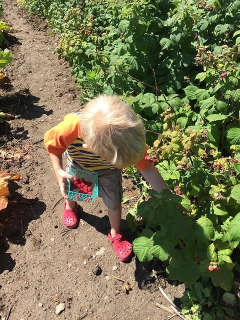 Liam Picking Raspberries