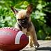 WOW!!!! that's a big ball!!! by desireeziemann