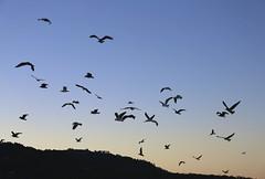 The Birds/sunrise on the Carmel River Beach