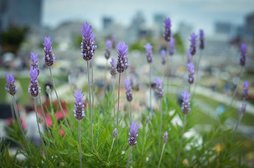 flowers in Nakanoshima park