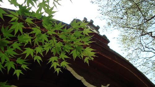 2013/06 平安神宮 神苑 #02