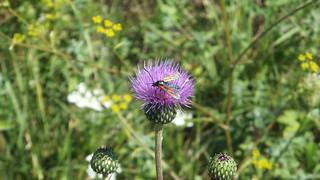 A strange bug on an ordinary flower