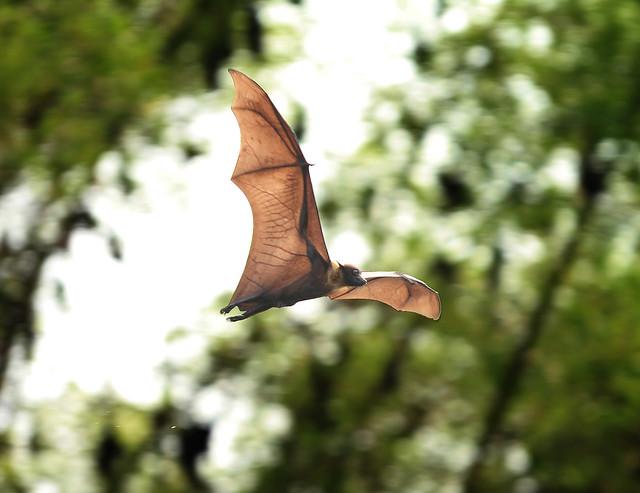 Ranganthithu Bird Sanctuary