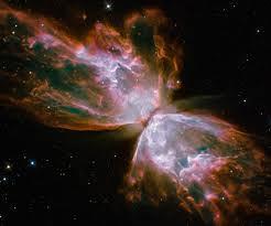 butterfly supernova