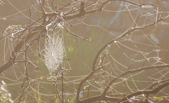 Tree Wide Web, Nikon COOLPIX S9050