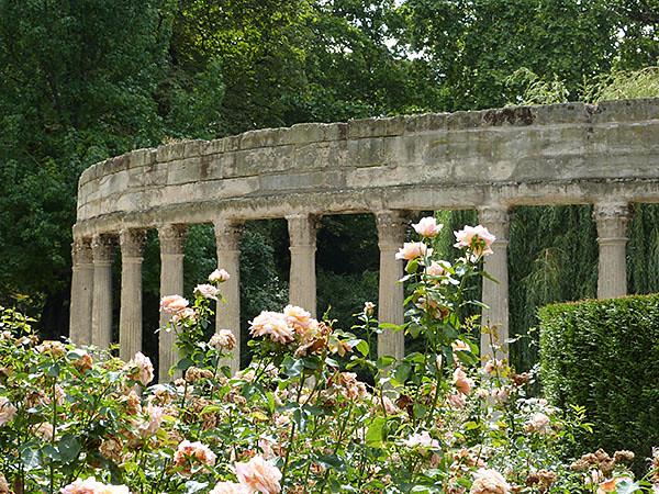 roses parc monceau