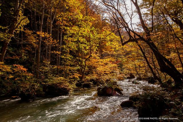 20131028-IMG_4486-3奧入瀨溪流