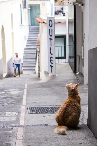 Capri Cat