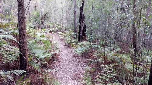 Glenbrook, Blue Mountains National Park: Campfire Creek Trail