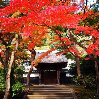 20131119 #円覚寺 #autumn #紅葉