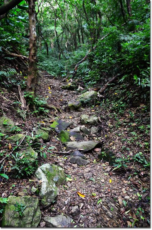 帽子山登山步道 6