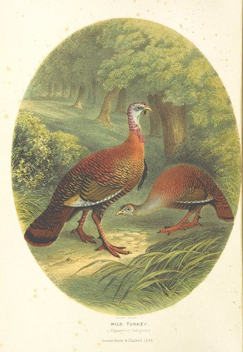 Image taken from page 10 of 'The Sportsman and Naturalist in Canada, or notes on the Natural History of the Game, Game Birds, and Fish of that Country ... Illustrated with coloured plates and woodcuts'