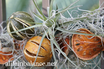 A Longwood Christmas: Dried Fruit and Air Plants