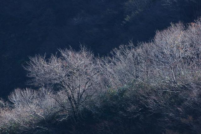 写真_「冬耐えて」