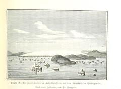 """British Library digitised image from page 163 of """"Grönland. Seine Eiswüsten im Innern und seine Ostküste. Schilderung der zweiten Dickson'schen Expedition ausgeführt im Jahre 1883 ... Mit ... Abbildungen und ... Karten"""""""