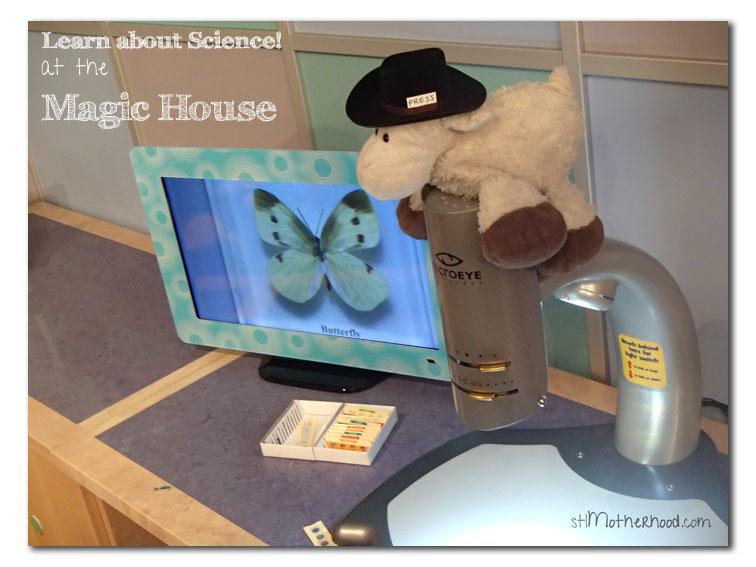 Lamb at the Magic House