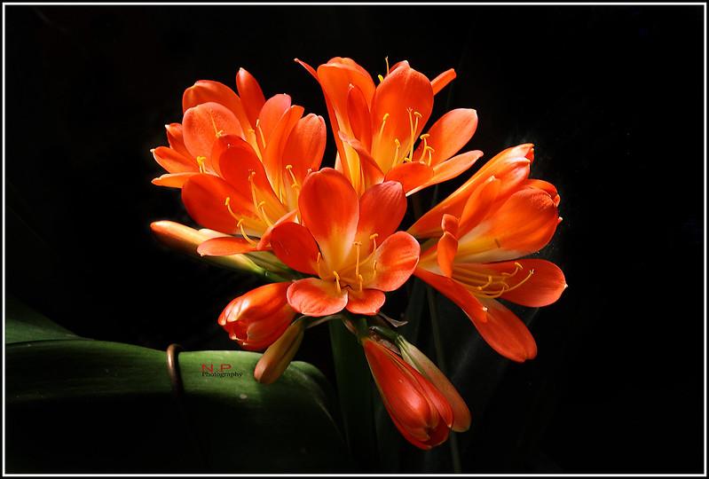 IMAGE: http://farm4.staticflickr.com/3794/12386465984_74f00fe025_c.jpg
