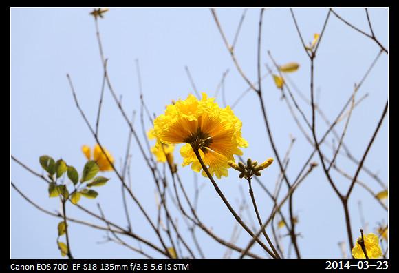 10_20140323_Yellow3