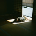 Sleepy by kiyoshimachine