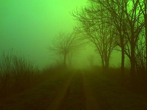 075/365 • green sunday