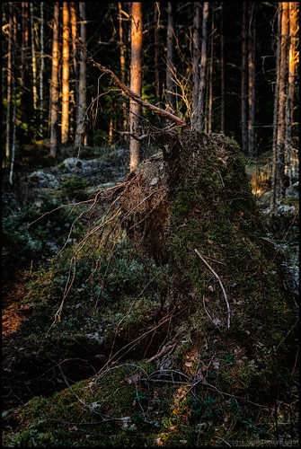 forest moss skog troll mossa foresttroll skogstroll utterleden