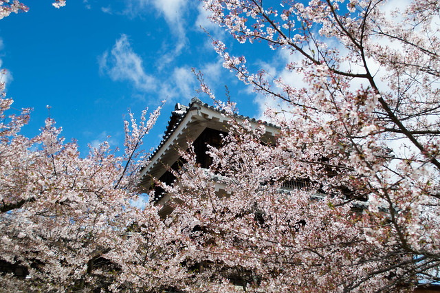 castle, sky, and blossoms