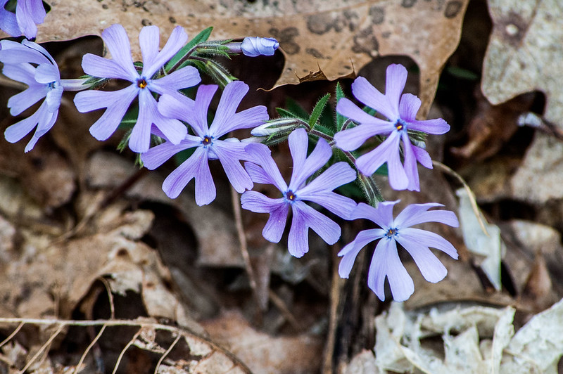 Hoosier National Forest - Pate Hollow - April 13, 2014