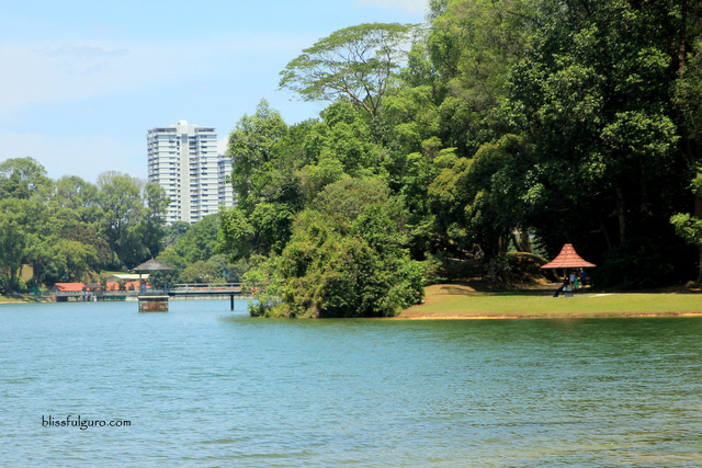 Singapore MacRitchie Reservoir Park