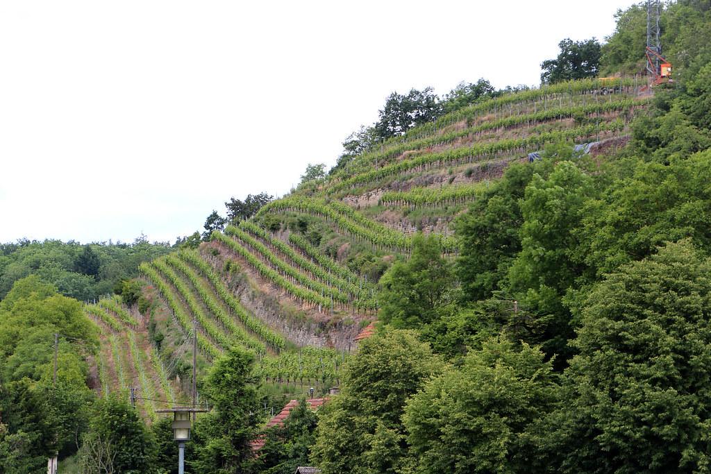 Weinfelder Kloster Maulbronn