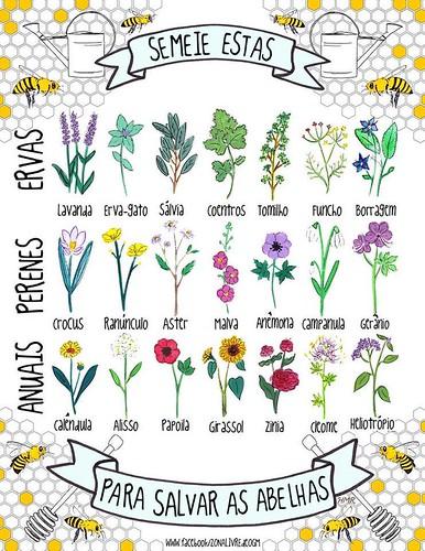 atividades horta pomar jardim educacao infantil:Semear ervas perenes anuais para salvar as abelhas – BE Castanheira de