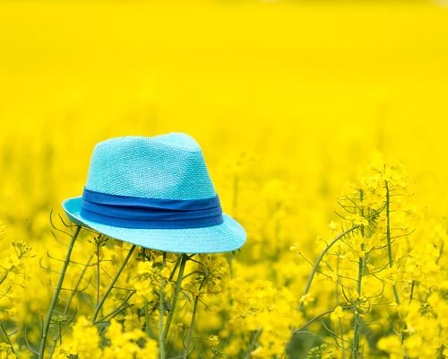 blue hat yellow skåne sweden torup 2014 närrapsenblommar