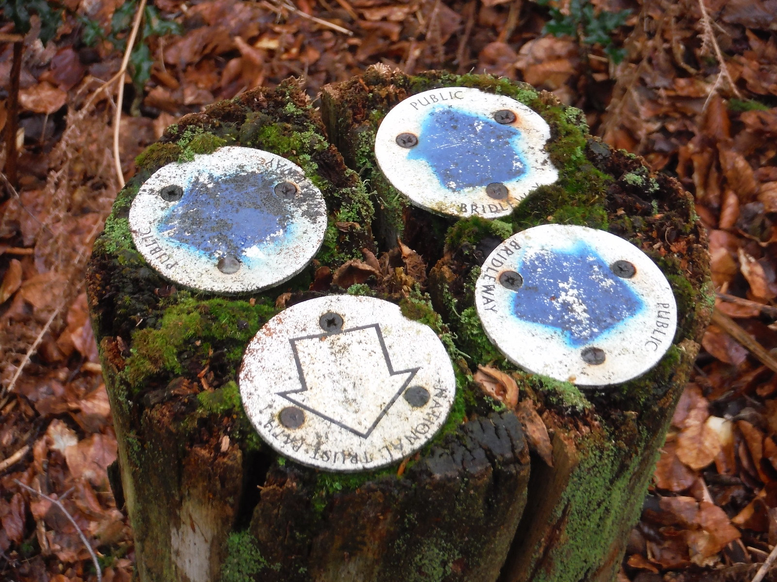 Markers on Tree Stump, Coombe Head SWC Walk 144 Haslemere to Farnham