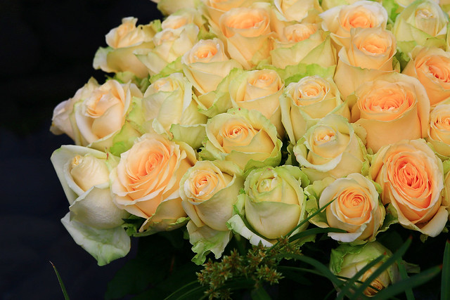 Roses For You !!