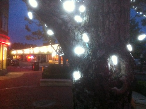 Medford - Lighted Trees in the Square