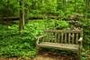 Forest Floor Bench at Nichols Arboretum - Ann Arbor, MI