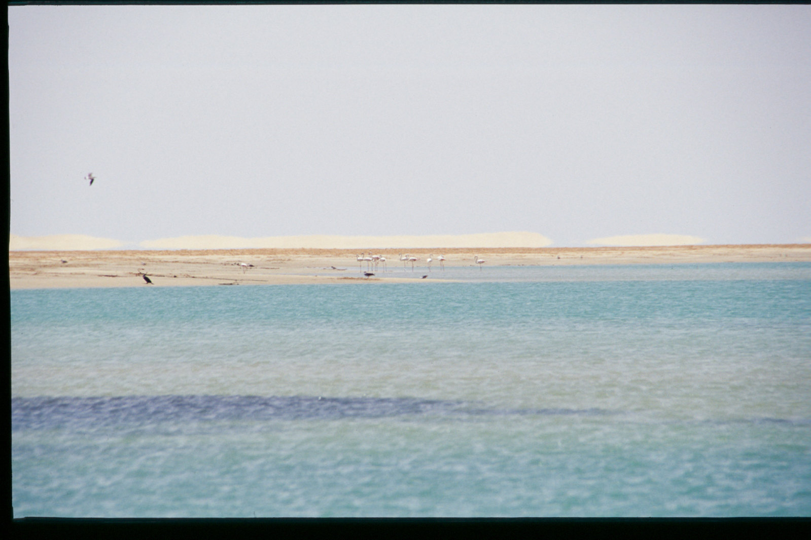 Mauritanie - Banc d'Arguin - Le désert et la mer