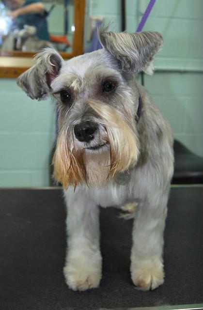 Perfection Dog Grooming Burscough