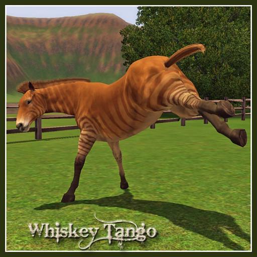 WhiskeyTango_Covershot01