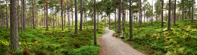 Carrbridge Woods Panorama