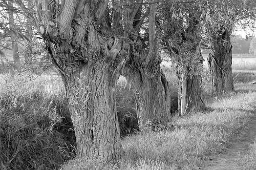 road sunset blackandwhite bw tree film analog 35mm europa europe canoneos30 poland polska d76 negative willow analogue gdansk gdańsk efke25 trójmiasto motława pomorskie wierzba żuławy bwfp
