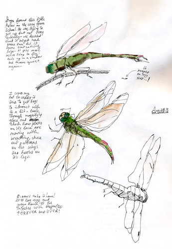 August 2013: Treasured - Dragonfly