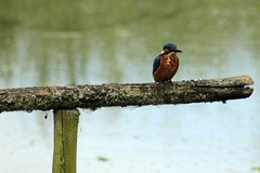 Lackford Lake Nature Reserve 16-06-2012