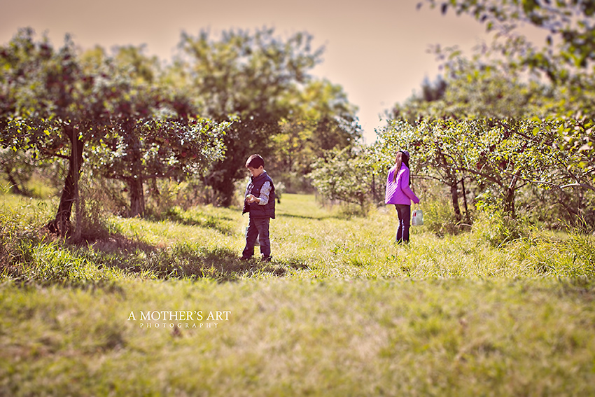 Apple Picking-2-2