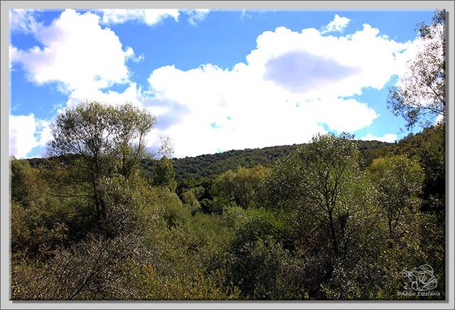 Roblón de Estalaya (Palencia) (1)