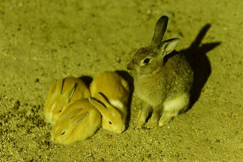 The sleeping 3 bunnies.