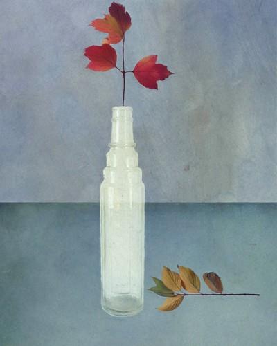 Autumn by Sarah Jarrett
