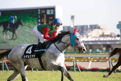 20131116 シゲルスダチ / Shigeru Sudachi